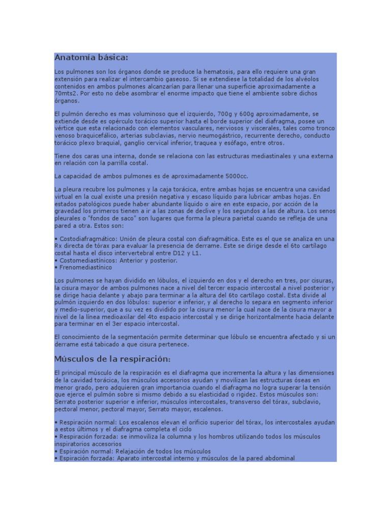 Anatomía básica RESPIRATORIA