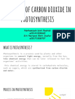 function of carbon dioxide in photosynthesis
