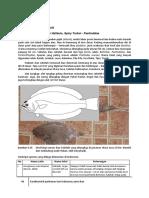 4C_1-Ikan-Hasil-Tangkap-1