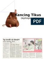 KencinaSAsSg Tikus
