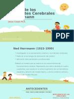 Cuadrantes Cerebrales de Herrmann