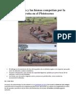 Los Hombres y Las Hienas Competían Por La Carroña en El Pleistoceno