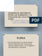 Diferencias Anatómicas Entre Los Rumiantes y La Fisiología