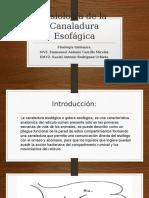Fisiología de La Canaladura Esofágica
