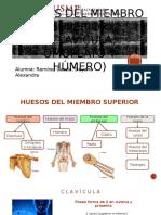 1. Huesos Del Miembro Superior PARTE 1 (Clavicula, Omoplato y Humero)