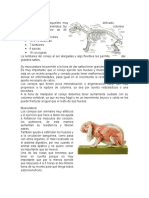 anatomia del conejo