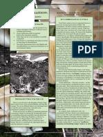 Linares Besc Molds Mycoremediation Fact Sheet