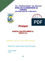 Proiect Audit
