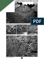 Registro Paleontologico Alto Río Volcán