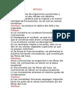 MITOSIS Y MEIOSIS.docx
