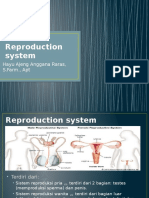 Reproduction System (STIKES)