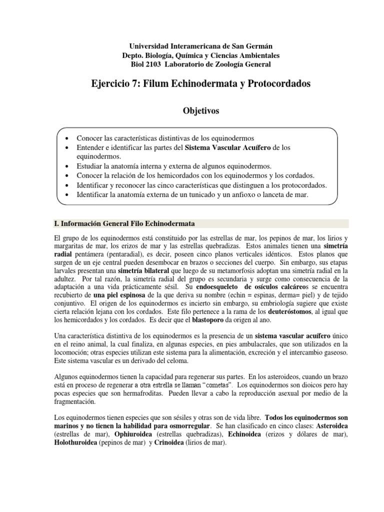 7 Equinodermata y Protocordados