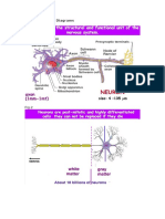 Nerve Histology Diagrams