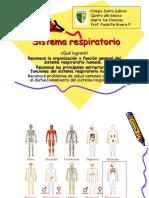 Sistema_respiratorio,_5_básico[1]