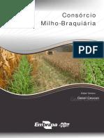 Consorcio milho-braquiaria