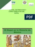 1 NOPAL- CARACTERISTICAS DE LA PLANTA.ppt