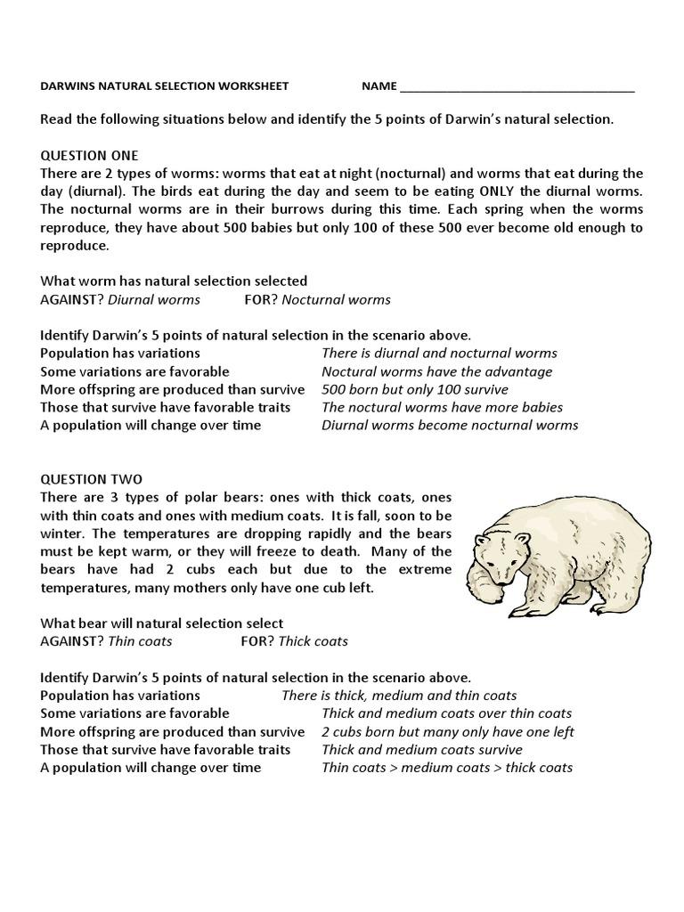 darwins natural selection worksheet key | Natural ...