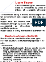 Muscle Tissue Slides C 20152016