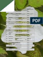 4.Lista de Plantas