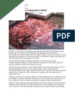 Ternak Ikan Nila Dengan Teknik Bioflok (Berita)