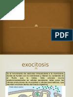 neuroexocitosis