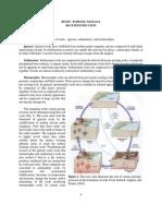 Rock Identification.pdf