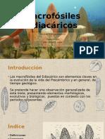 Macrofósiles Ediacáricos