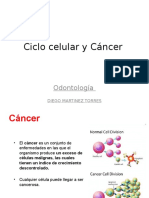 Ciclo Celular y Cancer