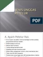 Jenis-Jenis Unggas Petelur2.