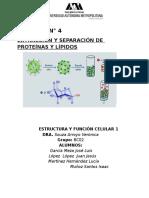 Practica Num.4 Extracción y Separación de Proteínas y Lípidos