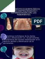 Morfologia de La Denticion Decidua