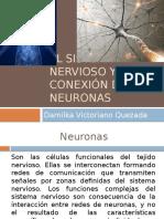 El Sistema Nervioso y Conexión de Las Neuronas