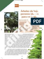 Ej14 Arboles Perennes b