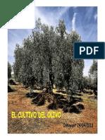 El Cultivo Del Olivo__Cajamar CV.2013