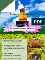 Drosera-rotundifolia