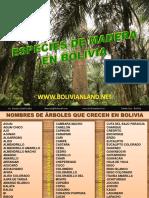 Madera Bolivia