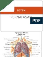 4. Anatomi Nafas