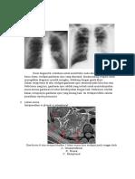 anatomi radiologi
