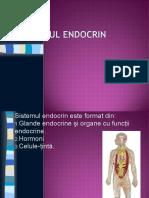 Sistemul Endocrin Final Olimpiada