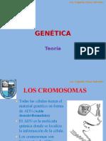 GENÉTICA TEORÍA.pptx