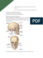 Tipos de articulacion y movimientos