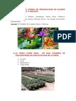 Peru Floricultura