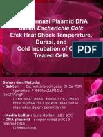 Plasmid DNA Transformation in Escherichia Coli