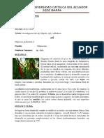 Investigacion Bibliografica_plantas Medicinales_mishell Erazo