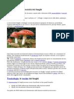 New Tossicità Funghi