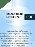 influenzae