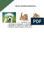 Cuidados de Los Animales Domésticos