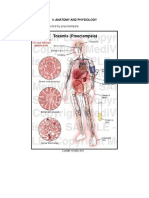 Anatomy Pathophysiology Preeclampsia