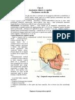 Anatomia Topografica a Regiunii Cerebrale a Capulu