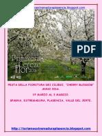 Cerezo en Flor 2016-Italiano